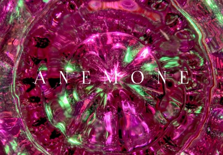 Anemone Interiors